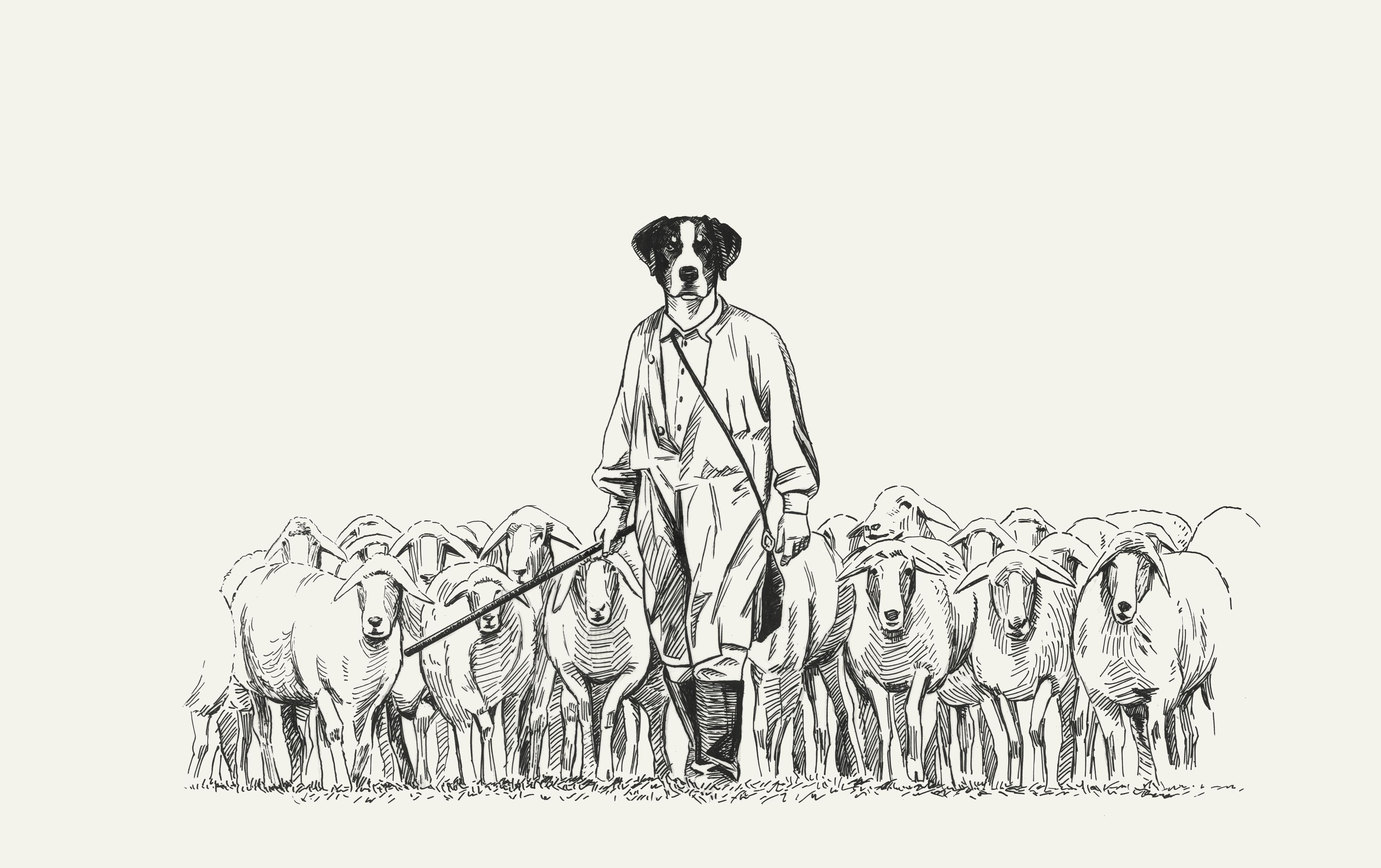 犬と羊のデッサンイラスト